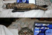 Funny animal memes!!