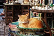 Colorido do Marrocos