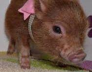 Fantastic - Domuz Pig