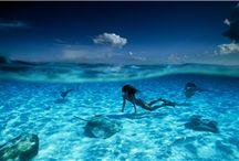 Ocean Creatures / by Aqua Lung Divers