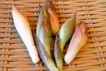 Ginger / Uses, Information, and great Pics of one of our favorite herbs: Ginger