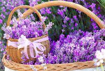 Levendula:) virágok