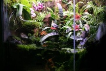 akvárium