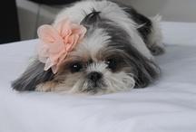 My Sweet Lola