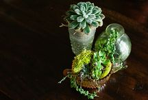 for the house - plants/garden / by Meg Mac