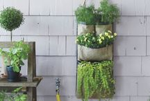 Hanging Garden / by Vixie at Vixie's Prop Shop