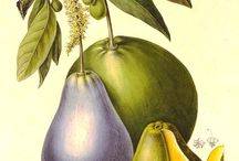 Ботаническая ил