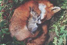 nature\animals