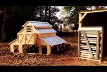 Lil Williamson Farm / crazy life on a city farm