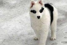hayvan-kedi-köpek-maması / Kedi, köpek mamaları hakkında bilgiler  Hayvanlar ve evcil hayvanlar hakkında bilgiler