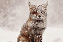 Brrrr! Zima! :-)