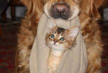 Old Dogs Love Cats (Sometimes) / Senior dogs have learned to get along with everyone... but sometimes those felines are a challenge!