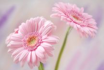 Flowers / by Beth Lowe