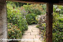 propagating plants gardening