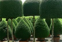 totally topiary