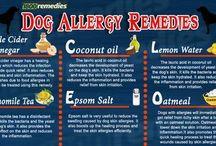 natural dog remedies