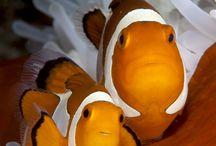 Halak, tengeri élőlények