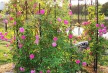 Gardening / shrubs, flowers, climbers
