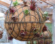 Potplants & Hanging plants