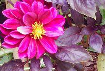 Mi jardin ♥