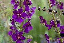 Gabbo plants