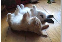 Cosas tiernas /cute things, kittens ans puppies / Amo los gatitos y cachorritos