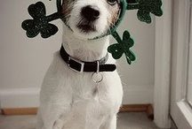 St Patricks Day / by Earl Netwal
