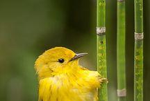 # Yellow