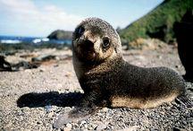 Kiss the seal / KISS THE SEAL ALREADY