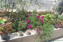 Jardim / Esse jardim foi feito em casa.