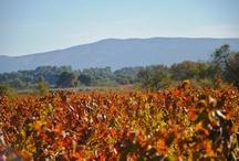 Belles Vignes - Beautiful Vineyards