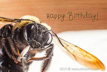 Birthday Cards / by pbh Art Inc