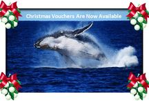 Gift Vouchers - What a gift to give! / Give someone an unforgettable experience with the majestic Humpback Whales