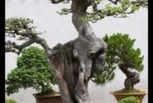 Treez and chiz