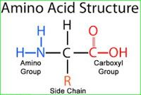 Protein MCQs