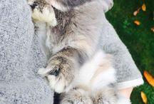 Søte kaniner