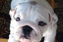 My future dog!!! / by Whitney Lindt