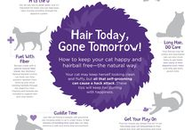 Tips for the Cat Parent / Tips and hints to make you a better pet parent!
