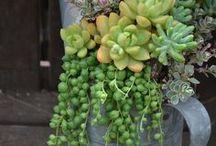 Gardening / Featured pins: plant, design, idea, diy, ... for Gardening lovers
