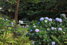 Gardening and the Great Outdoors / by Angela Robichaux