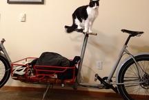 Cats on Bikes
