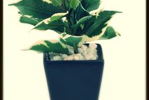 Artificial Potted Plants / Beautiful Decoration Pieces to buy for Office desks and Home Decor