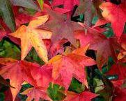 Fall Foliage Leaves Shipped To You!