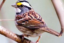 sparrow-serçe