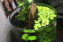 Aquariums; Ideas