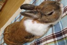 Haru / rabbits