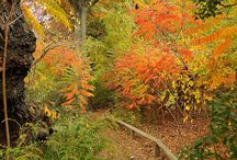 Autumn in the Natural World / Enjoy the vivid hues of autumn in the natural world. / by Brooklyn Botanic Garden