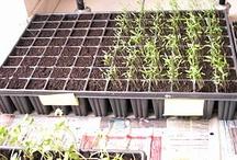 {Garden} Tutorials / Looking for tutorials to help with your garden? Follow this board for tons of gardening tutorials!