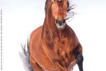 Les mags chevaux