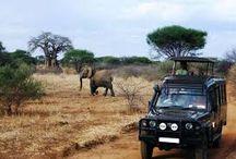 Short Safaris in Mombasa